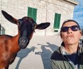 davi goat