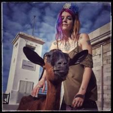 formentor goat